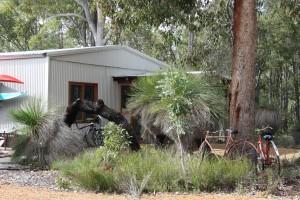 Bike shop in the bush